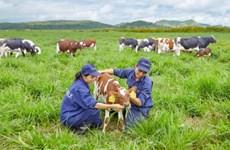 Vinamilk to build four hi-tech dairy farms in Thanh Hoa