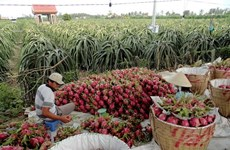 Australia helps Vietnam with agricultural development
