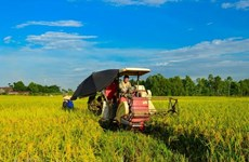 Vietnam sets to have 15,000 effective agricultural cooperatives