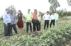 Hau Giang, RoK foundation work to apply high tech in agriculture