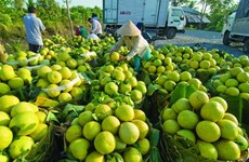 Clean production will help Vietnamese fruit compete with imports