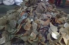HCM City seizes 3.8 tonnes of pangolin scales