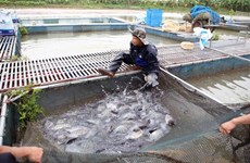 Aquaculture output picks up 6 percent in four months