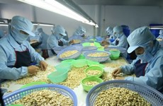 Advanced technology crucial to improve cashew output