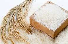 Agriculture ministry issues regulations on 'VIETNAM RICE' national brand