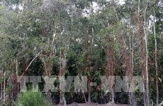 Soc Trang to implement sustainable forestry management programme