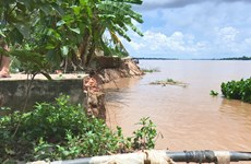 Dong Thap works to cope with erosion