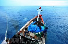Quang Binh recovers after marine pollution