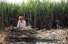 Reforms needed for sugar industry