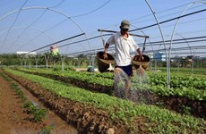 Vietnam sees potential for organic fertilizer business
