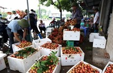 Thanh Ha litchis to be introduced to customers in Hanoi