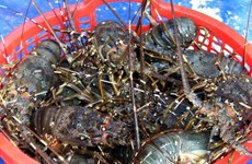Measures sought to facilitate Vietnam's shrimp export to US