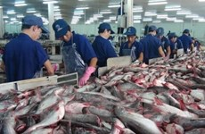Shortages of material tra fish continue