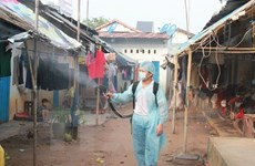 Can Tho city reels from dengue outbreak