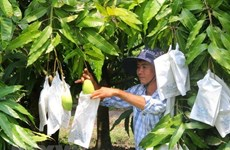 Seminar discusses post-harvest technology for mangos