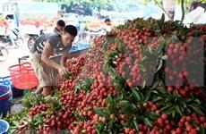 Vietnam's fruit, veggie exports exceed 2 billion USD in H1