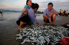EC to review yellow card against Vietnamese fisheries in early 2019