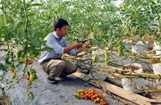 Nearly one-tenth of all agricultural firms set up in past six months