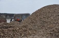Thailand to export 1.5 million tonnes of cassava