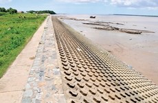 HCM City's sea dyke aims to stop waterlogging