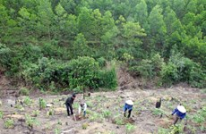 Quang Tri to have over 42,000ha of forest by 2020