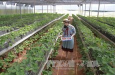 Lam Dong to set up new 215-ha high-tech agricultural farm