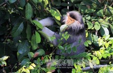 Project on rare primate preservation launched in Thanh Hoa
