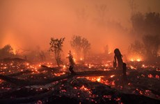 Indonesia works to prevent forest fires during Asian Games