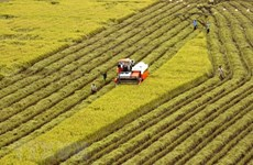 Quang Nam successful in restructuring agricultural sector