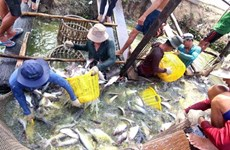 Agro-forestry-fishery exports hit 22.2 billion USD in first seven months