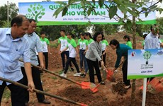 Programme planting 100,000 trees in Bac Kan launched
