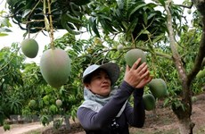 More organic products needed to boost agro exports to EU