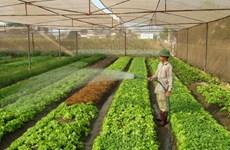 Hanoi sets up 80 safe farm produce chains