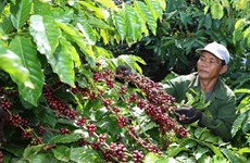 Building brand name for Vietnam's coffee