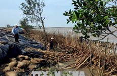 Ca Mau speeds up construction of breakwater on erosion threat