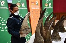 Malaysia seizes rhino horns worth 12 million USD