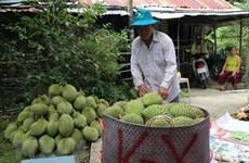 Farm produce needs improved quality to unlock EU market