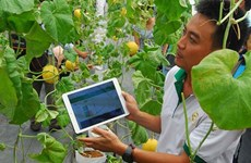 Can Tho promotes startup spirit among farmers