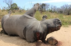 Short film calls for end to rhino massacres