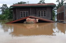 Widespread flooding wrecks havoc in Laos