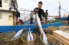Seafood exports face problems ahead due to EC's IUU fishing warning
