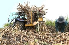 Vietnam to auction sugar import quotas for 94,000 tonnes
