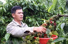 New approach to tapping Chinese farm produce market urged