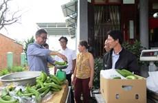 Lam Dong exports Laba banana to Japan