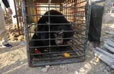 Last private bear bile farm in Tien Giang closed