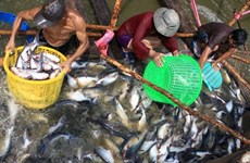 Mekong Delta region makes up 18 percent of GDP