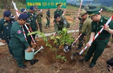 Friendship trees planted at VN-Laos-Cambodia border T-junction