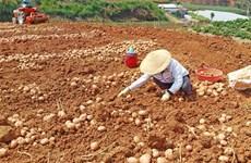 Sales of non-local farm produce banned at Da Lat market