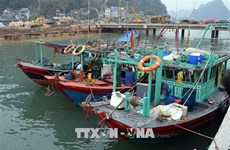 Fishing to be forbidden in Ha Long Bay's natural reserves