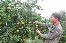 Hoa Binh promotes local fruit, farm produce